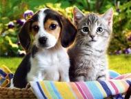 Послуги для домашніх тварин